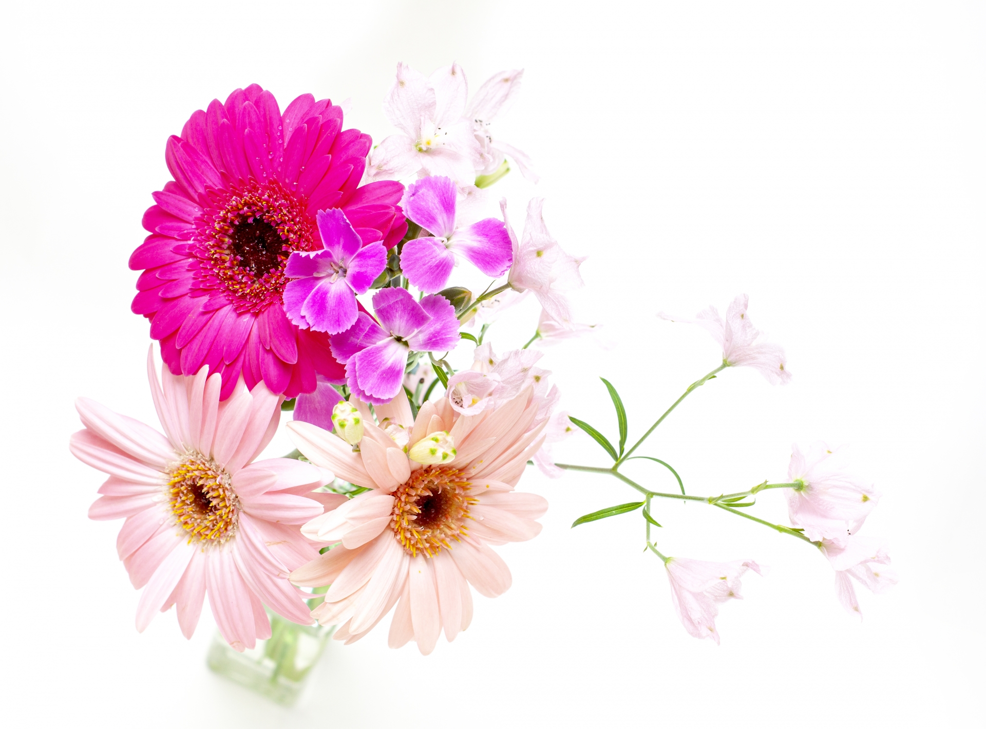 3年間いい花を付けなかったガーベラが見事に開花!何が変わった??
